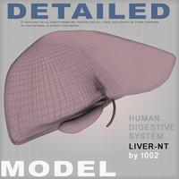 3d liver medical digestive model