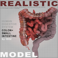 colon large intestine small max