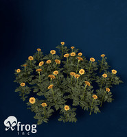 marigold flower 3d model