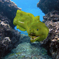 3d max green moray eel