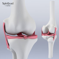 3d knee ligament model