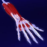 Human Hand X-Ray