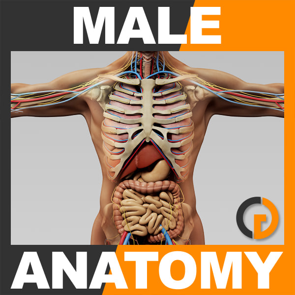 Anatomy_th001.jpg