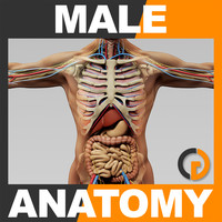 Human Male Anatomy - Body, Skeleton and Internal Organs