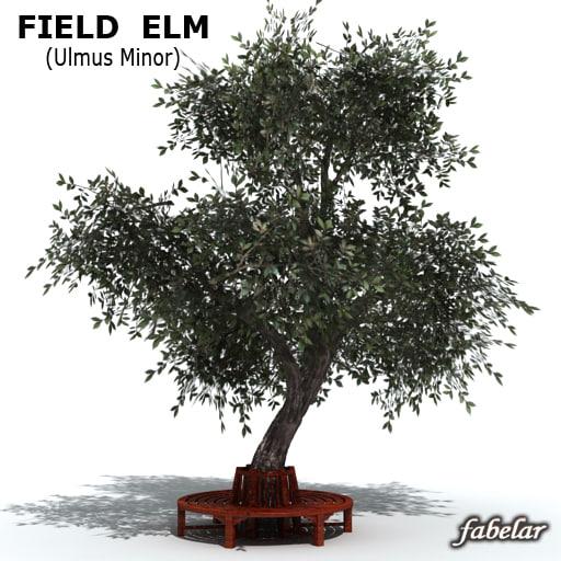 Field Elm