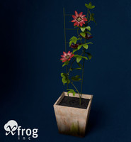 3d passion flower plants