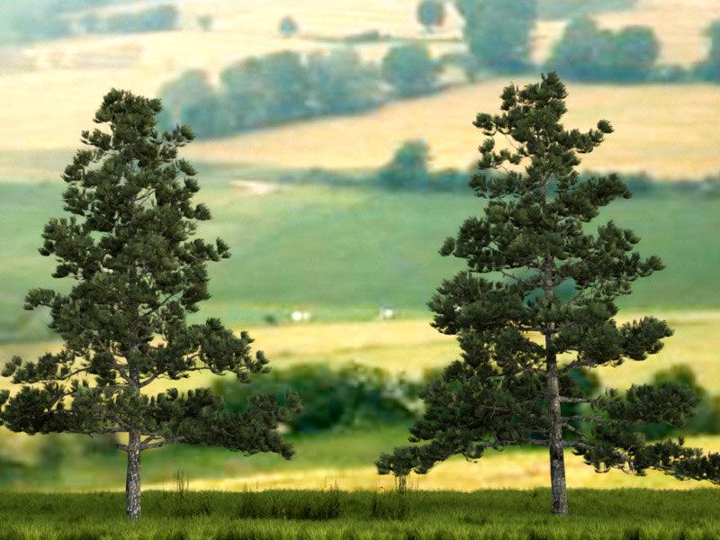 pine01_1.jpg