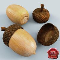 3d model acorn modelled