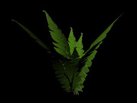 rainforest fern 3d model