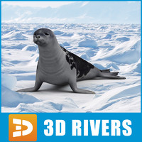 Harp seal by 3DRivers