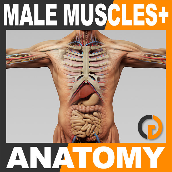 MusclesAnatomy_th001.jpg