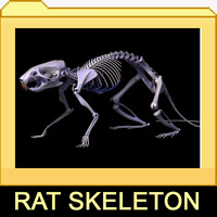 Rat skeleton with separated bones