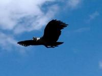 3d condor andes