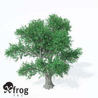 XfrogPlants Service Tree