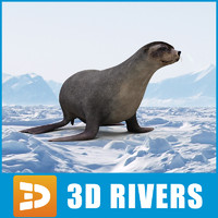 Brown Fur seal by 3DRivers