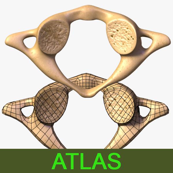 leo3dmodels_vertebra_Atlas_000.jpg