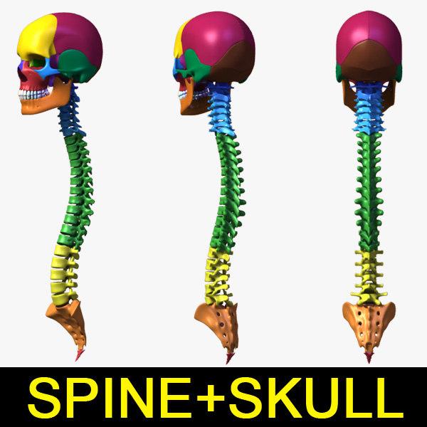 leo3dmodels_vertebra+skull_000.jpg