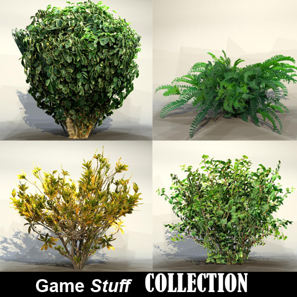 Collection_bush_04.jpg