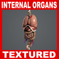 Internal Organs Anatomy Pack V04 (Textured)