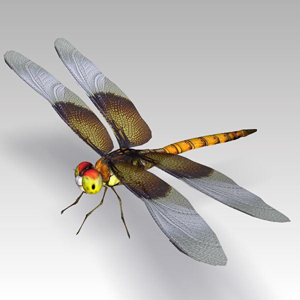 3d dragonfly cheetah3d model