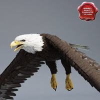 Bald Eagle Pose 1