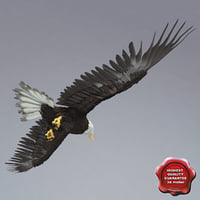 Bald Eagle Pose 5