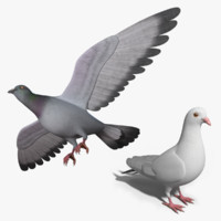 pigeon bird max