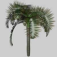 palm archontophoenix_3ds