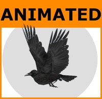 Animated Low Poly Raven
