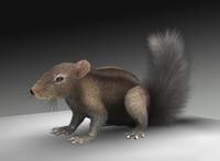 3d c4d squirrel