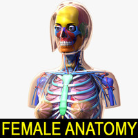 female anatomy 2 lwo