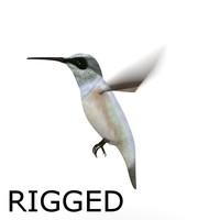 colibri bird rigged 3d fbx