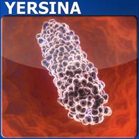 yersina bacteria max