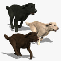 Labradors Collection (ANIMATED)