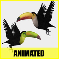 3d toucan different flying animation