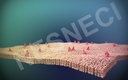 Cell Membrane 3D models
