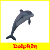 maya dolphin