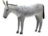 3d model donkey animal horse