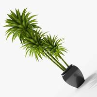 3dsmax dracaena plant