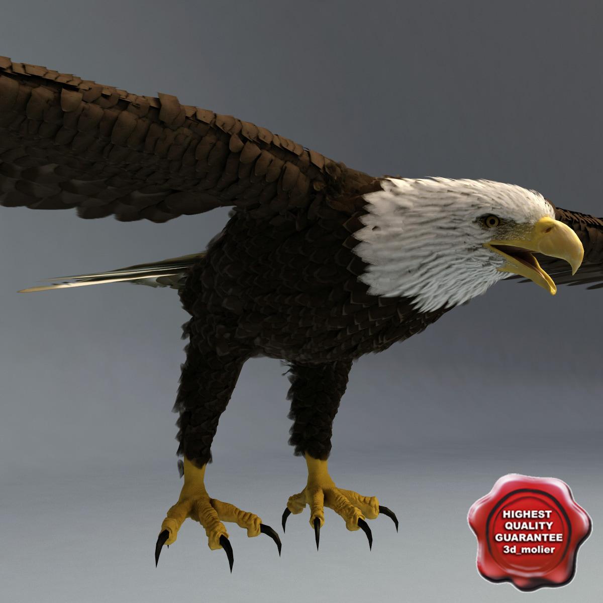 Bald_Eagle_Static_00.jpg
