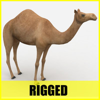 Camel - Rigged