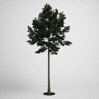CGAxis Scotch Pine Tree  19