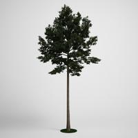 c4d tree