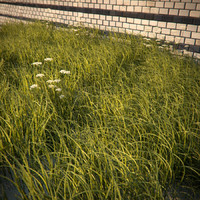HQ-Vegetation - Long Grass and Weeds