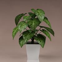 Plant_42