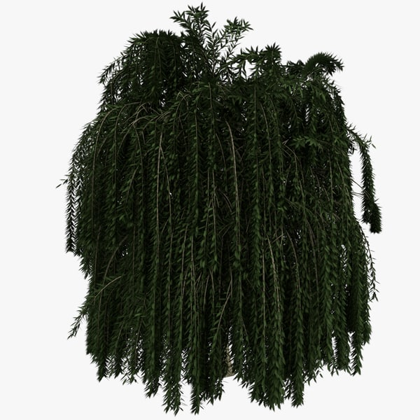 3d model weeping willow tree - Weeping Willow Tree... by Unibrow_1994