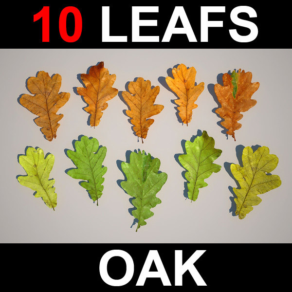 leafs_oak_screen.jpg