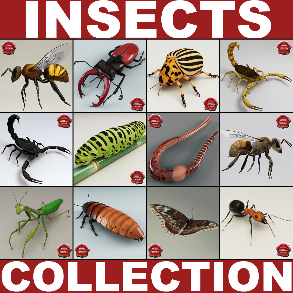 Insects_Collection_V4_000.jpg