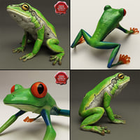 3d frogs hyla arborea model