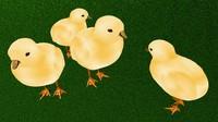 baby chicken 3d model